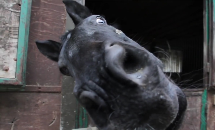 Propferd Sucht Lustige Pferde Videosbr Propferdat