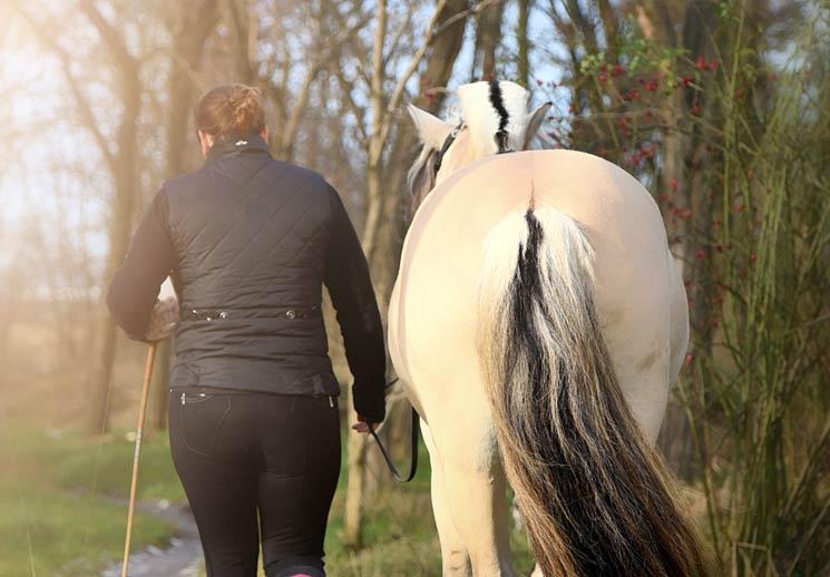 Wenn Pferde bestimmte Menschen tatsächlich als Führer betrachten, sollten sie ihnen freiwillig und ganz von selbst folgen, so die Wissenschaftler. Doch die Realität sieht vielfach anders aus ...