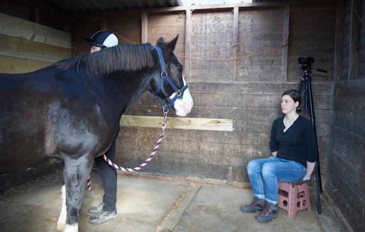 """Wie die Pferde der Testperson begegneten und welche Reaktionen sie zeigten, hing entscheidend davon ab, welches Bild – positiv oder negativ – sie von der Testperson """"im Kopf"""" hatten."""