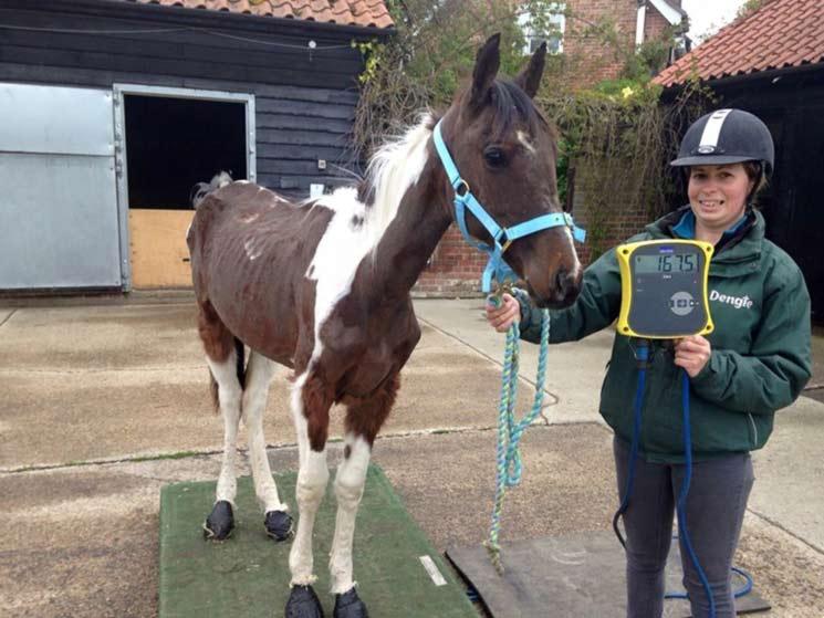 Lara Und Pferd Hd foto 2