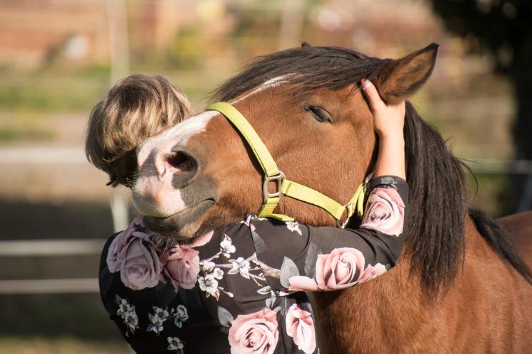 Sex mit frau pferd Beobachten Sie