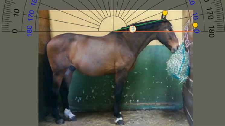 Bei der hohen Heunetz-Position muss das Pferd den Hals hoch tragen, der Kieferwinkel ist dabei eng.