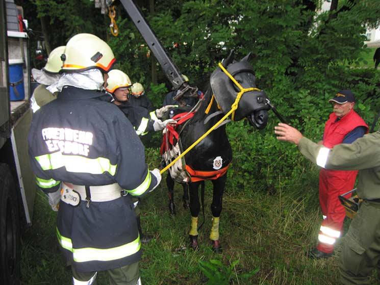 pferdesamariter-ausbildung feiert 20-jähriges bestehen - propferd, Hause ideen