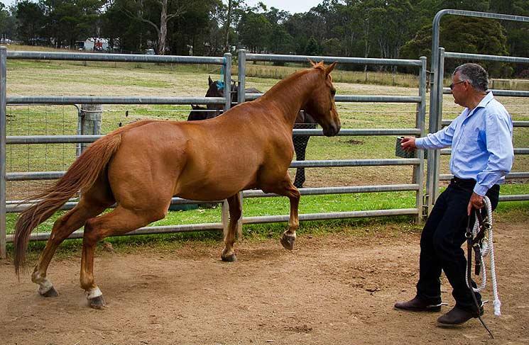Frau pferd besteigt Habe ein